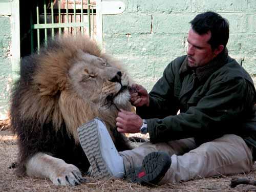 Löwenflüsterer Kevin Richardson